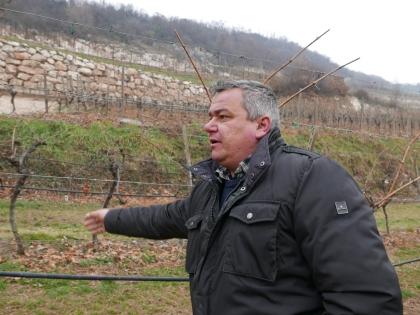 Carlo Boscaini dans ses vignes