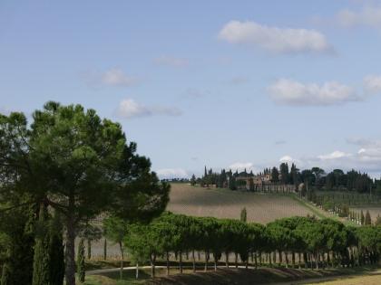 vignes de Vino Nobile de Montepulciano