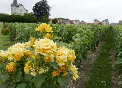 Clos de Bergeronneau, Champagne Bergeronneau-Marion à Villedommange